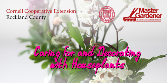 caring for and decorating with house plants