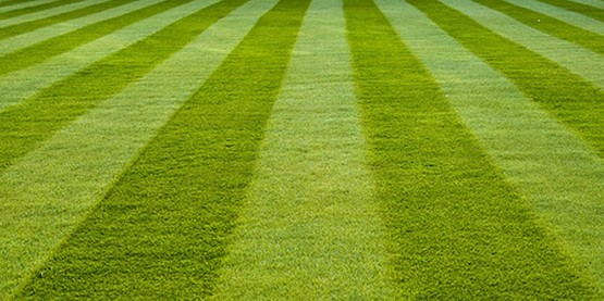 Find links here to resources that can help you have and enjoy a more beautiful lawn.