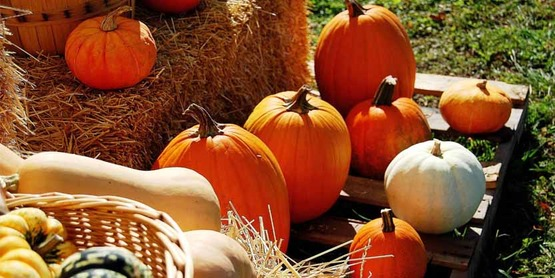 pumpkins and squash from CCE-Niagara Facebook page