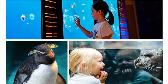 4-H Bus Trip to the New England Aquarium & Quincy Market
