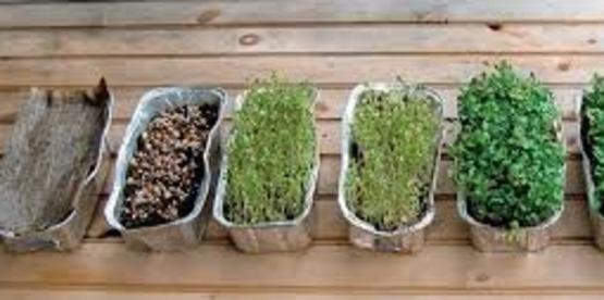 Indoor Salad Gardening