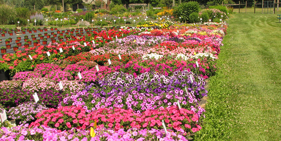 Boletines | Pender Pines Garden Center