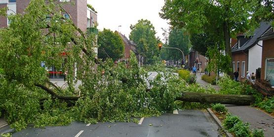 Trees Damaged