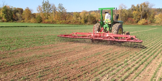 Tine weeding organic grains Hudson Valley Farm Hub