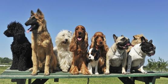 Furry Friends 4-H Dog Club