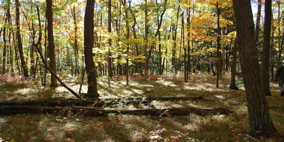 Find information here on woodlots and agroforestry products.