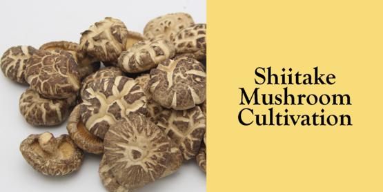 2019 Shiitake Mushroom Cultivation