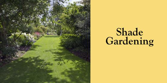 2019 Shade Gardening