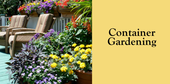 2019 Container Gardening