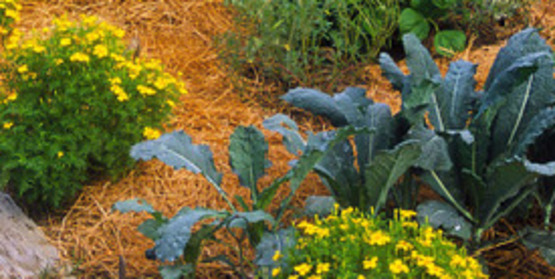 Vegetable Garden by Nancy Ross