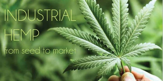"cover of ""Industrial Hemp from Seed to Market"""