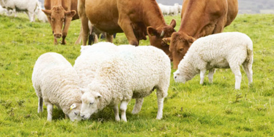 Eleventh Annual Winter Green-Up Grazing Conference