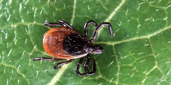 1/26: Don't Get Ticked NY at TCPL--Learn about ticks in our landscape.
