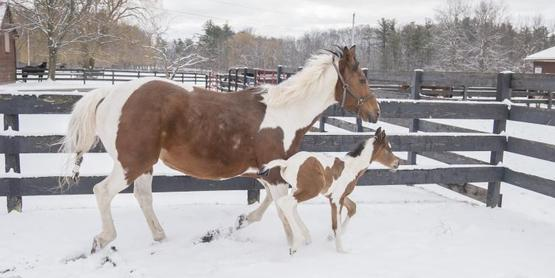Cornell Equine Seminar Series