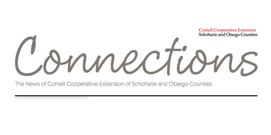 Connections Newletter
