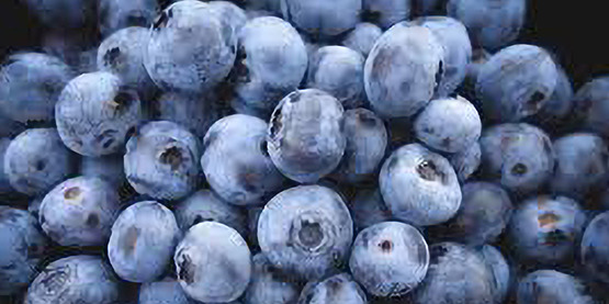 Blueberries: Care and Maintenance