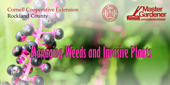 managing weeds and invasive