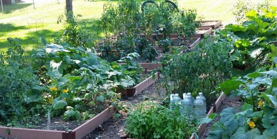 Starting Your Vegetable Garden