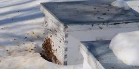 Cornell Cooperative Extension Beekeepers Discussion Group