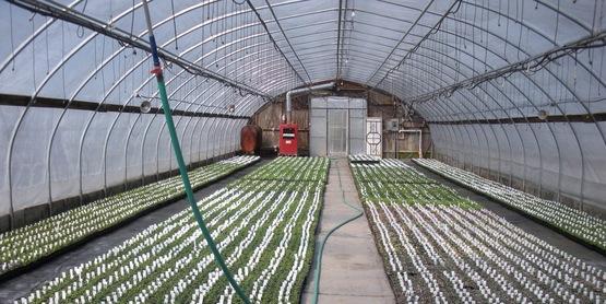 2019 Hudson Valley Nursery & Greenhouse Growers' School