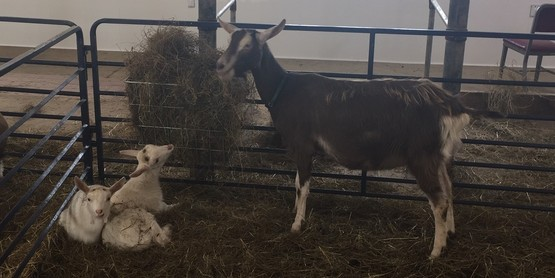 Goat Kidding Workshop