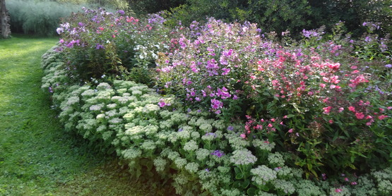 Perennial borders at the Gagnon garden
