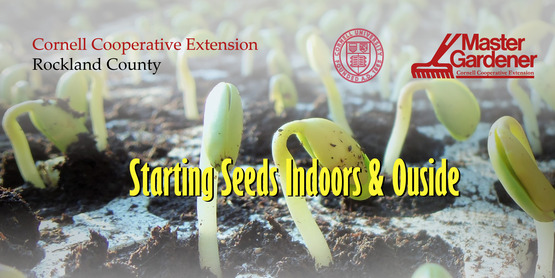 Our MGVs present Starting Seeds Indoors and Outside