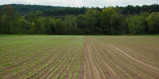 Grain and cover crops emerging 2016