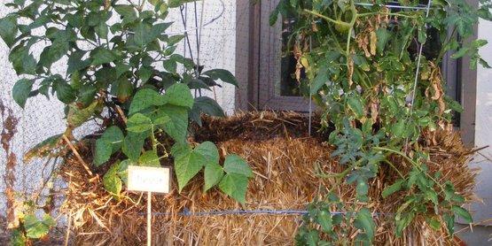 Straw Bale Gardening