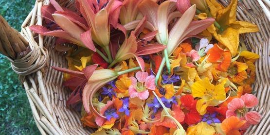 Colorful delicious edible-flowers, Yarrow Hollow Farm, Holmes, Putnam County