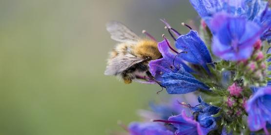 bee pollinator garden