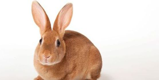 stock photo rabbit
