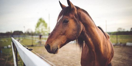 Stock photo horse