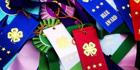 fair ribbons