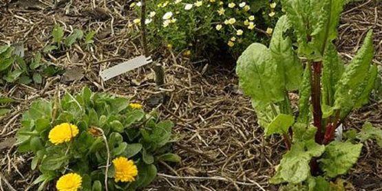 Companion Gardening