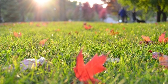 grass, lawn, leaves, fall