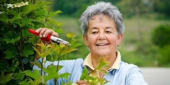 Susan Scheck, Master Gardener, Pruning a Plant
