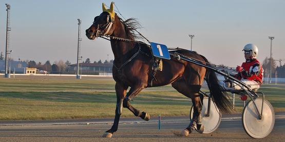 Harness Horse Racing Flyer