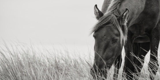 Horse grazing in long grass.