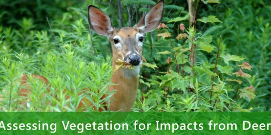 AVID: Assessing Vegetation for Impacts from Deer