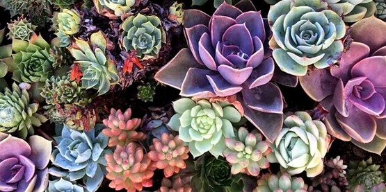 a variety of succulents