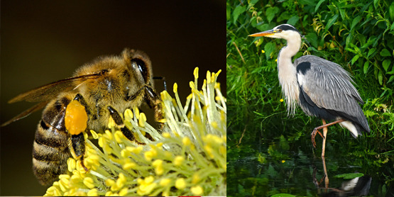 insects, wetland bird