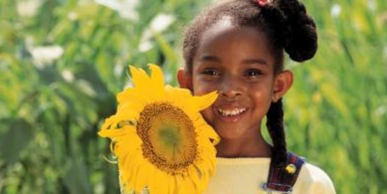 4-h sunflower challenge