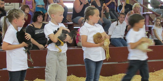 chicken show at Onondaga Youth Fair 2018