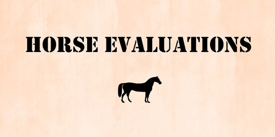 Horse Evaluations