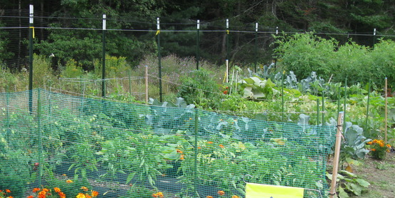 Community Garden in Speculator