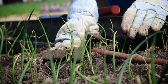 Cornell Cooperative Extension | Gardening for Health and Well-Being