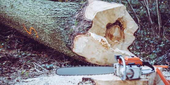 chainsaw and cut down log