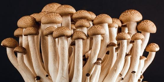Cornell Cooperative Extension | August Mushroom Foray