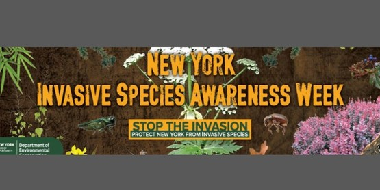 New York State Invasive Species Awareness Week